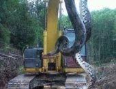 بالصور.. عمال بناء يعثرون على أناكوندا عملاقة تزن ٤٠٠ كج شمال البرازيل