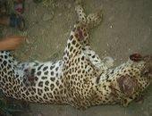 بالصور.. الأمن يخلى مزرعة الحيوانات المفترسة بالعياط من الأهالى بعد اقتحامها