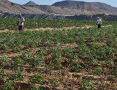 بالصور.. مزرعة القويح بالقصير تستعد لإنتاج العروة الثانية من الخضراوات