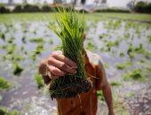 العراق يرجئ الموعد النهائى لمناقصة شراء 30 ألف طن أرزا