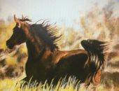 بالصور.. فنانة تشكيلية تقدم معرضًا كاملاً عن الخيول