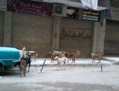 بالصور.. أهالى مدينة قباء فى جسر السويس يشكون من انتشار الكلاب الضالة