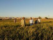 بالصور.. نجاح أول تجربة لزراعة الأرز بنظام رى القمح بالوادى الجديد