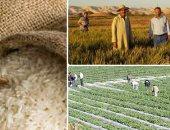نائب البحيرة يتقدم بطلب إحاطة لوزير الزراعة بسبب استيراد الأرز الهندى
