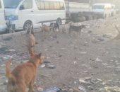 مواطن يستغيث من الكلاب الضالة فى مدينة القاهرة الجديدة
