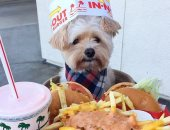 بعد التشرد.. بوباى يصبح أشهر كلب على انستجرام ويأكل فى أشهر مطاعم العالم