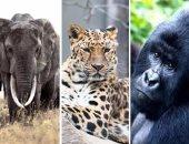 بالفيديو.. حيوانات على وشك الانقراض.. تليجراف تحذر: العالم يواجه أكبر موجة انقراض منذ عصر الديناصورات.. تراجع عدد الحيوانات 67% خلال 50 عاما.. وعلماء: الإنسان يقود الكوكب إلى الحافة