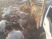 حبس سائق ضبط بحوزته 25 حمارا مذبوحة داخل سيارة فى المنوفية