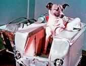 """اليوم الذكرى الـ59 على إطلاق الكلبة """"لايكا"""" للفضاء"""
