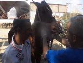 بالفيديو.. قافلة طبية لعلاج الخيول فى نزلة السمان