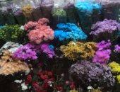 علاء جمال الجرزاوى يكتب: سارة