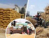 التموين: غرفة عمليات لمتابعة استلام القمح المحلى من المزارعين