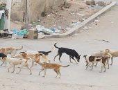 """شكوى من انتشار الكلاب الضالة فى شارع """"السباق"""" بمصر الجديدة"""