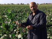 مزارعو دمياط: تحريك أسعار الوقود رفع سعر حرث ورى وحصاد الفدان