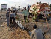 أهالى قرية 6 أكتوبر بشمال سيناء ينظمون حملة لزراعة محيط الطريق