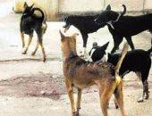 قارئ يشكو انتشار الكلاب الضالة بشارع مستشفى الصدر بالعمرانية