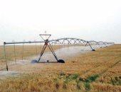 زراعة المنوفية: أنهينا زراعة 100 ألف فدان من القمح