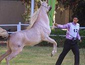 بالصور.. وزير الزراعة مهرجان الخيول سيساهم بحد كبير فى تنشيط السياحة فى مصر