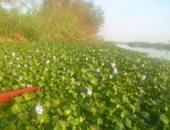 بالفيديو والصور.. صيادو المنوفية يطالبون بإزالة ورد النيل من فرع رشيد
