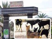 استقبال 8 حالات لأطفال مصابين بعقر كلب ضال بحميات المنصورة