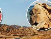 تعرف على أهم معالم السياحية بمدينة دهب