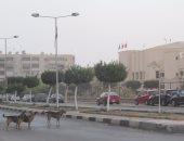 شكوى من انتشار الكلاب الضالة فى جزيرة محمد بالوراق