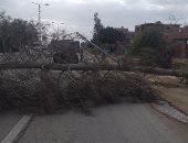 """بالصور.. سقوط شجرة وعمود كهرباء بطريق """"المنصورة - دمياط"""" بسبب سوء الطقس"""