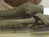 دراسة حديثة: الساقان المحنطتان فى متحف تورينو بإيطاليا تعودان لنفرتارى