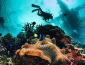 5 معلومات عن جزيرة شدوان بالبحر الأحمر أبرزها تمتعها بشعاب مرجانية نادرة