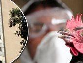 طب بيطرى الفيوم يؤكد: إيجابية إصابة مواطن بأنفلونزا الطيور