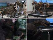 """بالفيديو.. متحف """"الحيوان"""" تحفة فنية منذ مائة عام على أرض الفراعنة"""