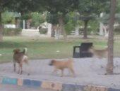 أهالى مدينة نصر يشكون من انتشار الكلاب الضالة بالشوارع