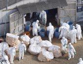 """الصين تعلن وفاة 61 مصابا بسلالة """"إتش7إن9"""" من إنفلونزا الطيور فى فبراير"""