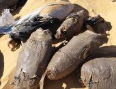 بالصور.. حراس آثار يعثرون على 20 كيلو بانجو مدفونة فى الرمال بأسوان