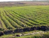 كيف تضاعف مصر الصادرات الزراعية والغذائية لـ10 مليارات دولار؟
