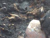 السيطرة على حريق نشب فى مزرعة دواجن بشرق قنا