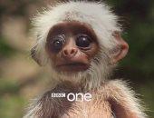 """بالفيديو.. BBC ترسل """"روبوت"""" لرصد الحياة البرية.. شاهد كيف تصرفت الحيوانات"""