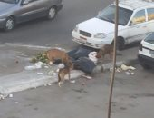 قارئ يشكو عدم وجود صناديق للقمامة بميدان الشهيد المستشار هشام بركات