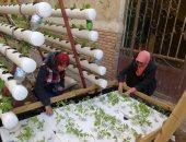 """بالصور.. شباب دمياط يستغلون الأسطح فى """"الزراعة بدون تربة"""""""