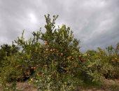 الزراعة: ارتفاع صادرات الموالح لـ 1.752 مليون طن وإجراءات مشددة للشحنات