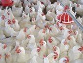 الإحصاء: 119جنيها متوسط سعر كيلو اللحوم.. و34 للدجاج البلدى يناير الماضى
