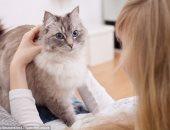 دراسة تحذر: أضرار جديدة لتربية القطط.. أبرزها انفصام الشخصية