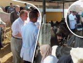 تقرير حكومى: تحصين 3.4 مليون رأس أبقار وجاموس ضد مرض الحمى القلاعية