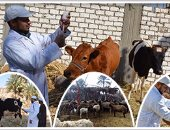 نواب يطالبون وزارة الزراعة بعرض خطتها لمواجهة الحمى القلاعية