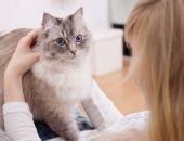 الرفق بالحيوان.. قارئ يرسل فيديو إنقاذ قطة محشورة بين فواصل أحد الكبارى