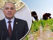 الرى: زراعة 724 ألف فدان أرز فى 9 محافظات خلال العام الجارى