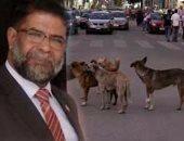 """جدل علمى حول """"كلاب الشوارع"""".. """"البيطريين"""": الإخصاء هو الحل.. ناشطة حقوقية تسميمها بـ""""الإستريكنين"""" غير علمى.. عضو بـ""""طاقة النواب"""": رد من """"الزراعة"""" خلال شهر.. وطالبنا بعلاج الكلاب """"المسعورة"""""""