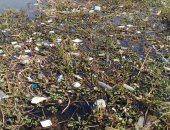 قارئ يرصد تلوث مياه النيل بالقمامة بمنطقة الوراق