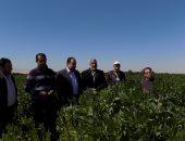 بالصور.. وكيل زراعة جنوب سيناء يتفقد إحدى مزارع الفول البلدى