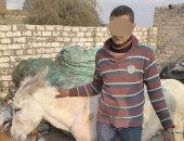 أهالى منيا القمح يسلمون تاجر خردة للأمن لقيامه بذبح حمير بالشرقية